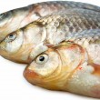 Fresh river carp — Stock Photo