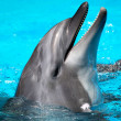Head of the dolphin blue water — Stock Photo