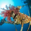 Soft coral on a shipwreck — Stock Photo