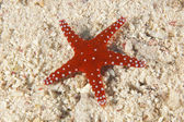 Sea star on a sandy seabed — 图库照片