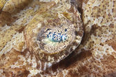 Extreme closeup of crocodilefish eye — Stock Photo