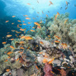 Beautiful tropical coral reef — Stok fotoğraf