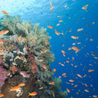 Beautiful tropical coral reef — Stock Photo #11326751