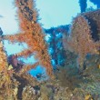 Soft coral on a shipwreck - ストック写真