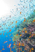 Coral reef wall in the sun — Photo