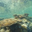 Tropical coral reef underwater — Foto Stock