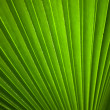 Green leaf Line background — Stock Photo #11603722