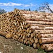 Pile of logs — Stock Photo #10855240