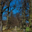 Stock Photo: Path lined avenue of trees.