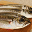 Mackerels on wooden plate — Stock Photo