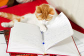 Small cat is learning — Stock Photo