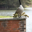 Goose and Goslings. - Stock Photo