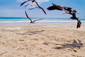 Chasing Seagulls — Stock Photo
