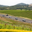 Road through the vineyard — Stock Photo