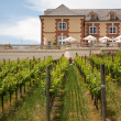 Stock Photo: Vineyard and a winery