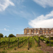 Vineyard and a winery on the background — Stock Photo #11245168