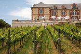 Vineyard and a winery — Stock Photo