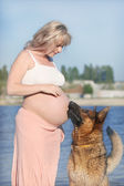 Pregnant woman and sheep-dog — Stock Photo