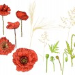 Royalty-Free Stock Vector Image: The collection of poppy flowers and ears. Elements of plant