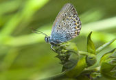 Beautiful butterfly on a green flower — Stock Photo