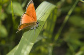 Red Butterfly on green leaf — Stok fotoğraf