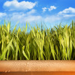Freshly grown grass in large pot - Stock Photo