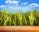 Freshly grown grass in large pot — Stock Photo