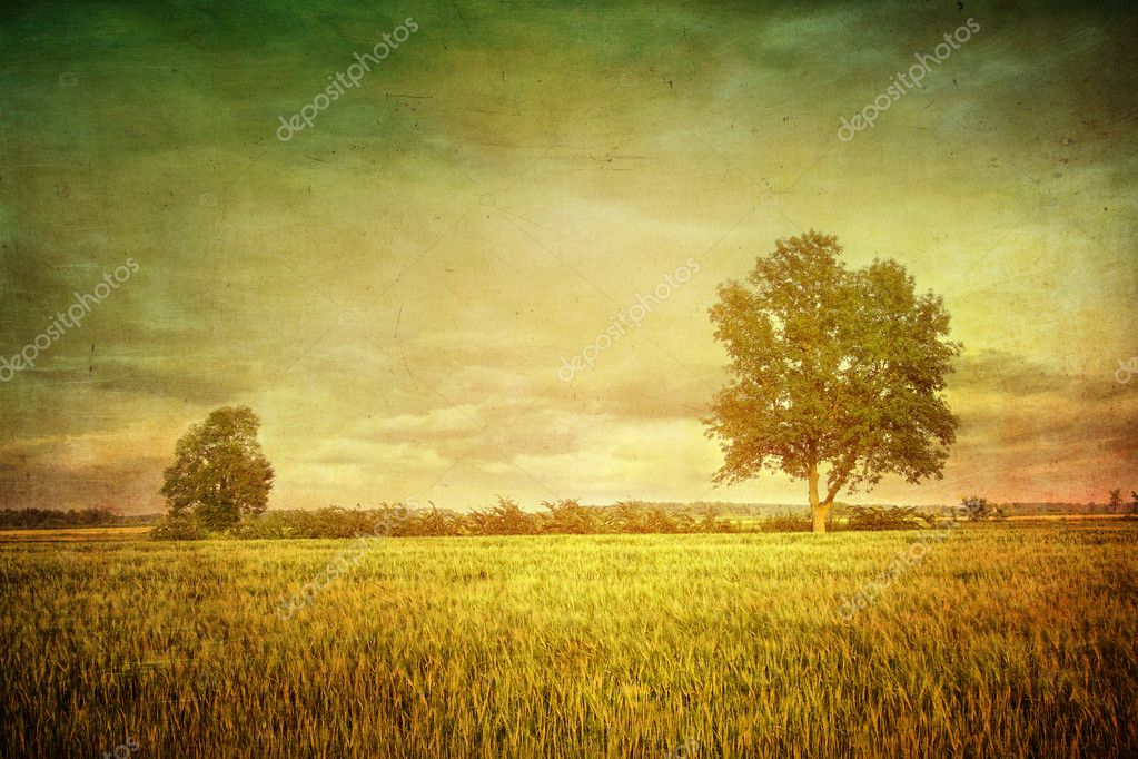 Beautiful summer fields of wheat with dramatic sky — Stock Photo #11642808