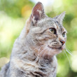 Stock Photo: Portrait of striped cat outdoor