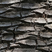 Background of palm bark — Stock Photo