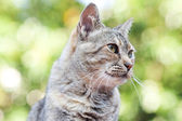 Portrait of a striped cat outdoor — Stock Photo