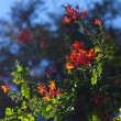 Red orange flowers against the blue sky — Stock Photo