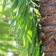 Leaf of palm tree in sunlight — Stock Photo