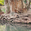 Monkeys against a large tree roots in the zoo — ストック写真