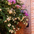 Pink flowers on a background of red brick wall — Stock Photo