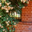 Pink flowers on a background of red brick wall — Stock Photo #11238685
