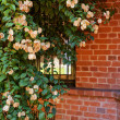 Stock Photo: Pink flowers on a background of red brick wall