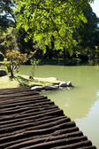 Wooden bridge with and pond in the park — Stock Photo
