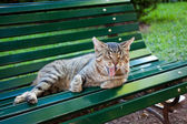 Portrait of a street cat outdoor — Stock Photo