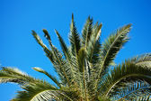 Palm tree on the background southern blue sky — Foto Stock