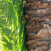 Hoja de palmera en la luz del sol — Foto de Stock