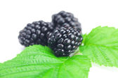 Blackberries and green leaves on white background — Photo