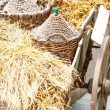 Autumn wooden cart — Stock Photo #12387077
