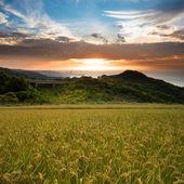 красивые рисовые с приятно backgroun — Стоковое фото