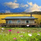 Bella piccola casa con paddy — Foto Stock