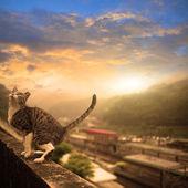 Cat with nice sky — Stock Photo