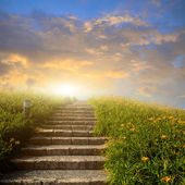 Mountain flower meadow with Ladder — Stock Photo