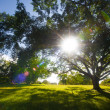 Royalty-Free Stock Photo: Green trees in park and sunlight