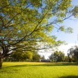 Green trees in park and sunlight — Stock Photo #12268454