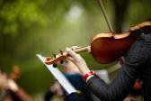 скрипка — Стоковое фото